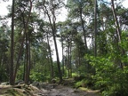 foret-fontainebleau-01