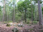 foret-fontainebleau-05