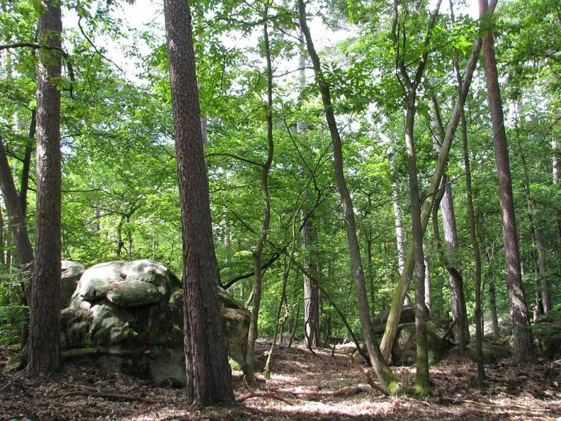 foret-fontainebleau-06.jpg