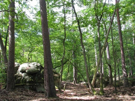 foret-fontainebleau-06