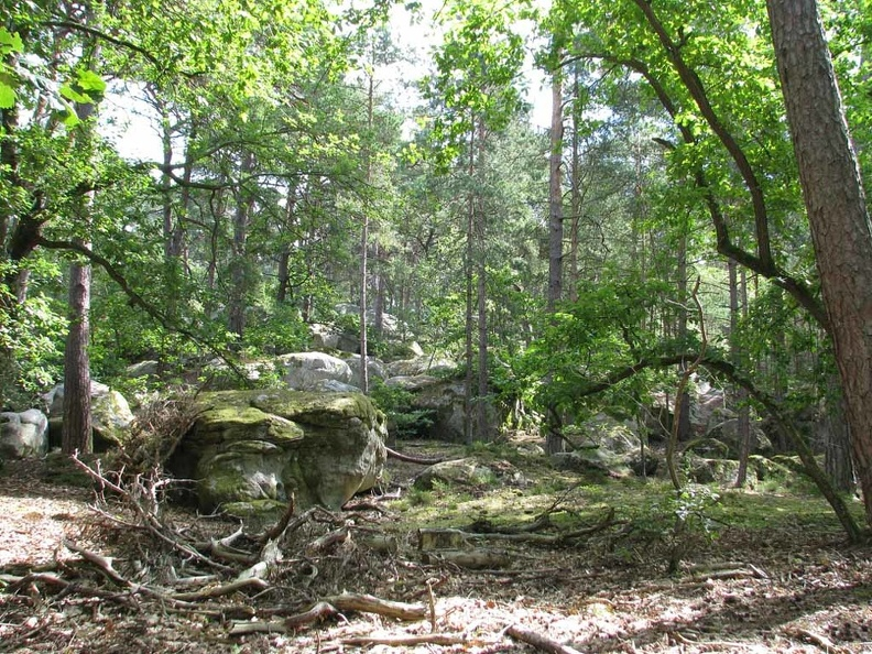 foret-fontainebleau-07.jpg